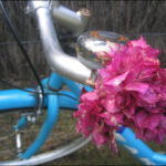 Ode to Bicycling