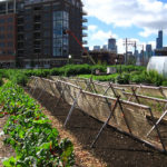 TheCityFix Picks, April 22: Urban Agriculture, Exercise-Friendly Cities, Metro Crime
