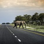 Friday Fun: Balancing Urbanization and Elephants in Southern Africa